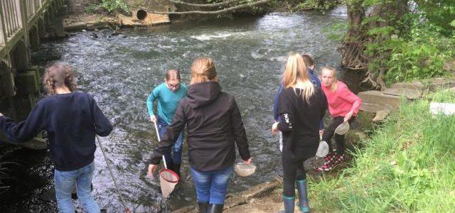 Forscher des 6. Jahrgangs untersuchen die Gewässerqualität der Fuhse